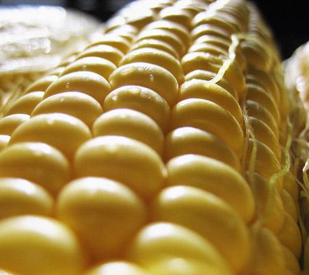 Porumb modificat genetic