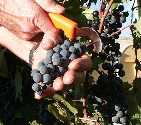 Taxa vitivinicolă